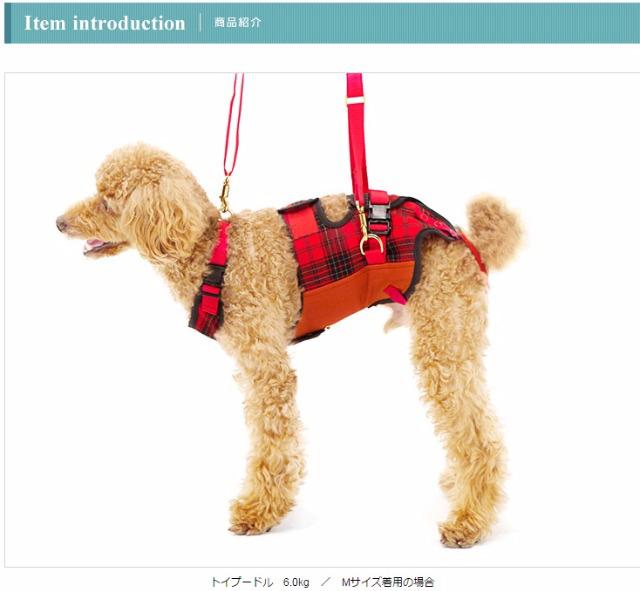 小型犬介護