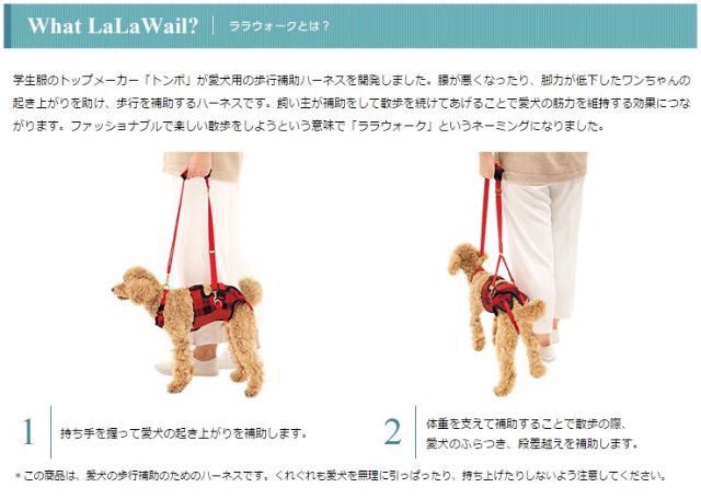 シニア犬のお散歩