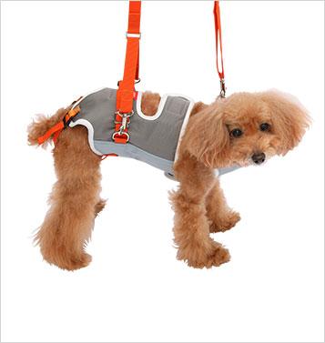 トイプードル小型犬用ハーネス